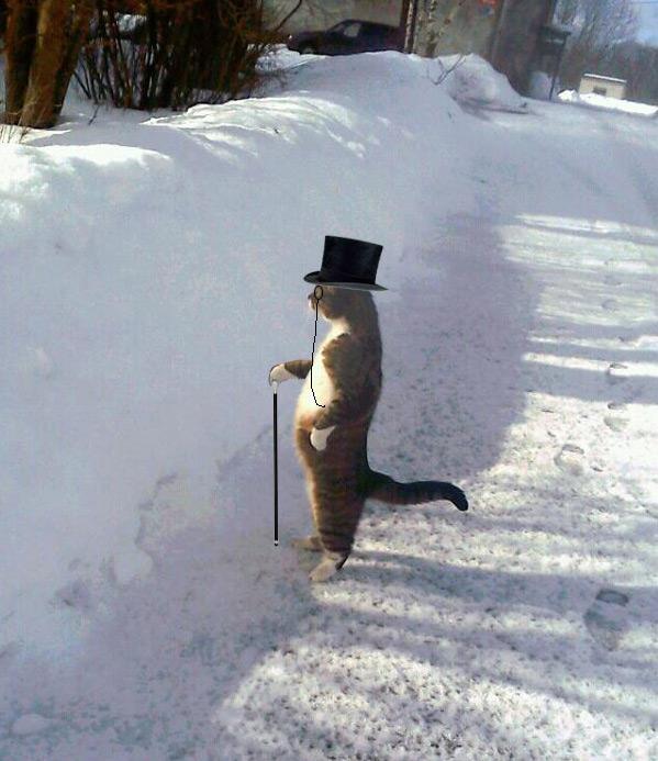 meowj-sophisticated