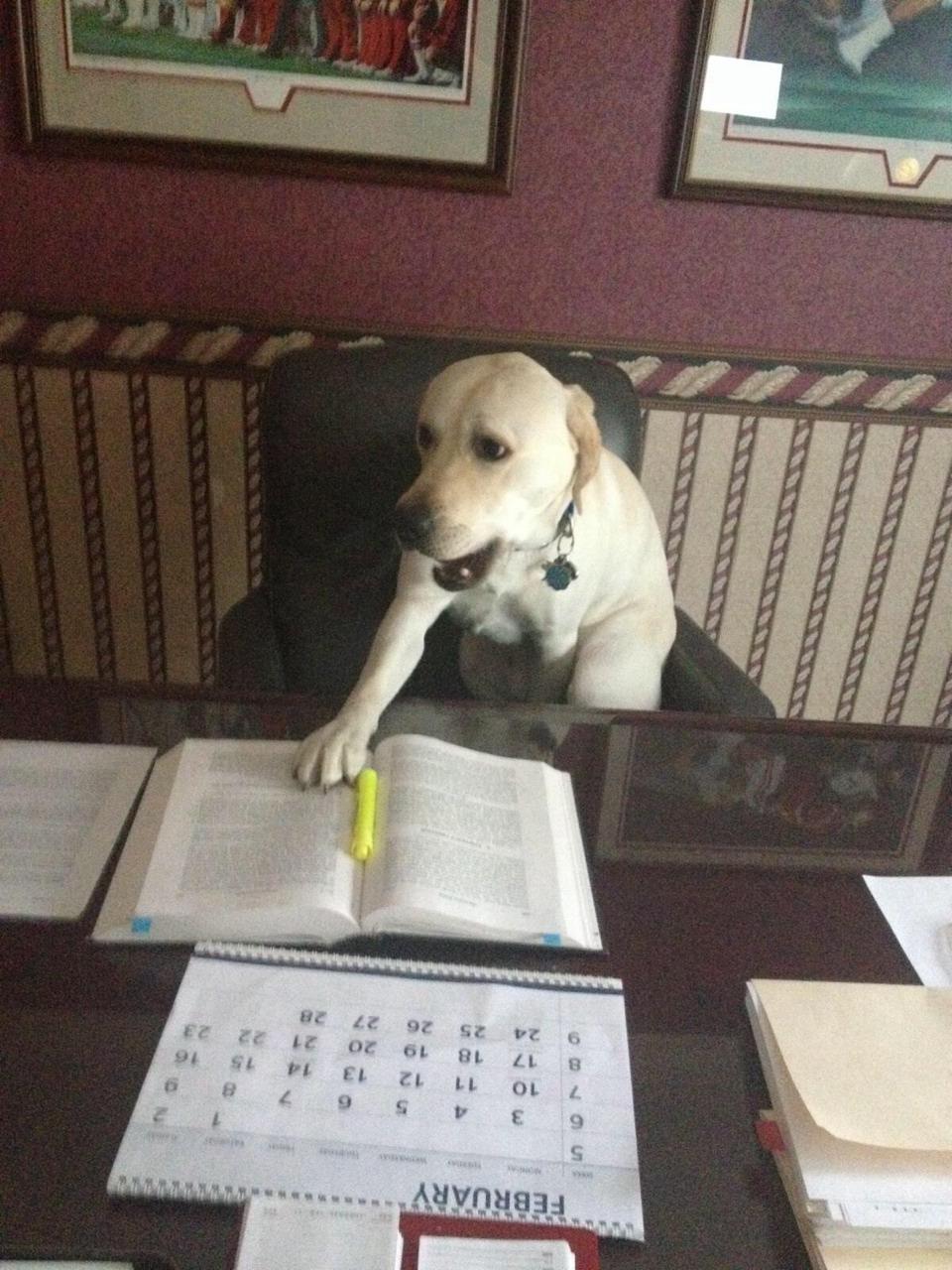 Study Dog